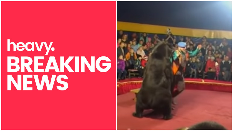 bear attacks russian circus performer