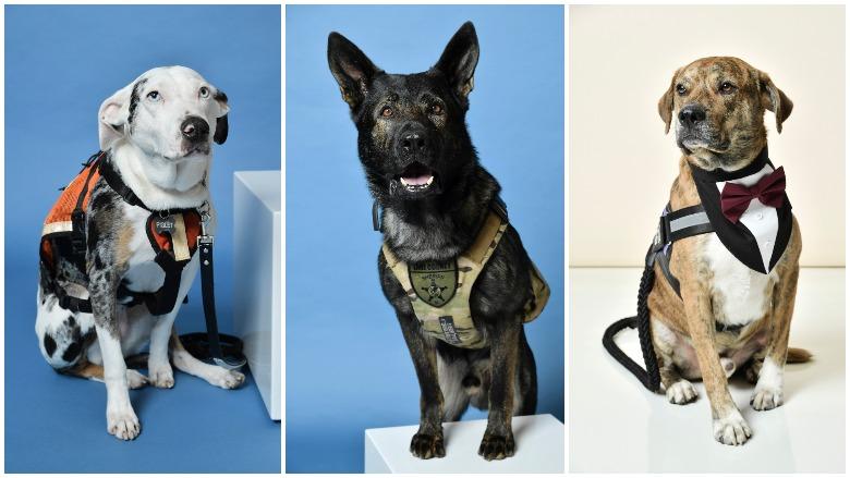 Hallmark Hero Dog Awards 2019