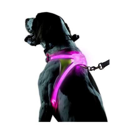 noxgear LightHound Reflective LED Dog Harness