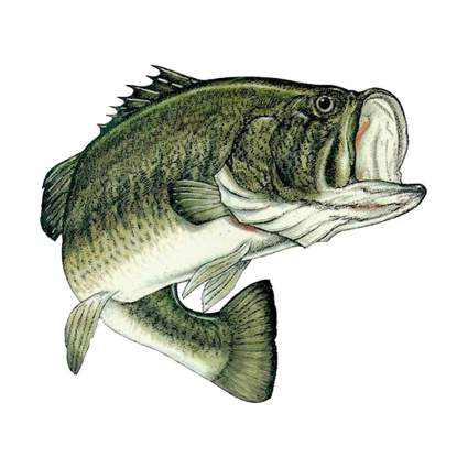 "Rogue River Large 8"" Bass Sticker"
