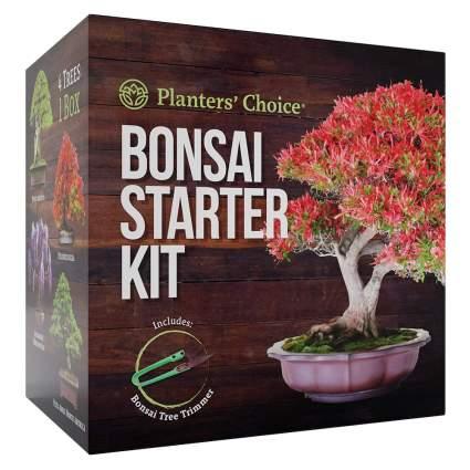 bonsai growing kit