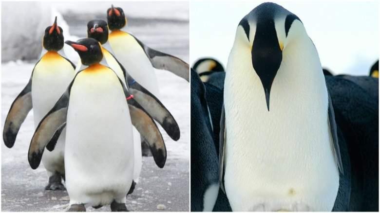 Cincinnati Zoo Penguins