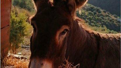 Baldomera donkey coronavirus
