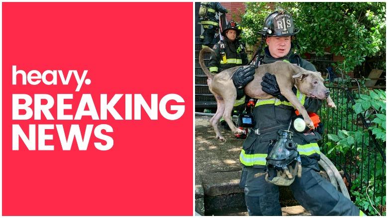 Dog Rescue Washington