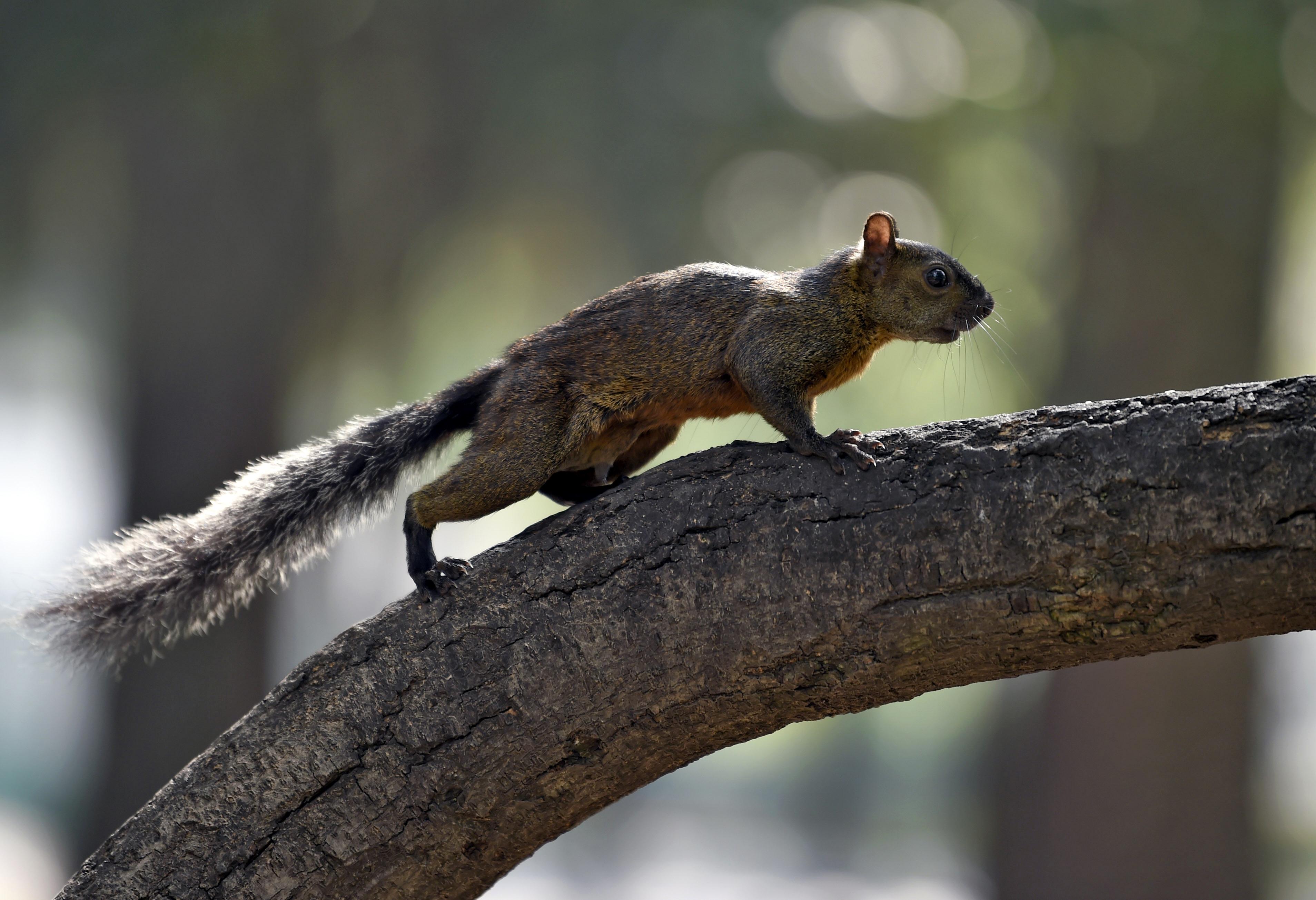 squirrel colorado