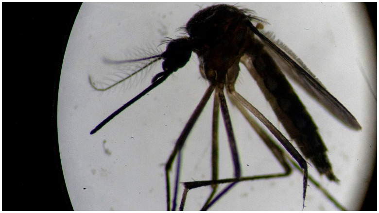 Florida Genetically Modified Mosquitoes
