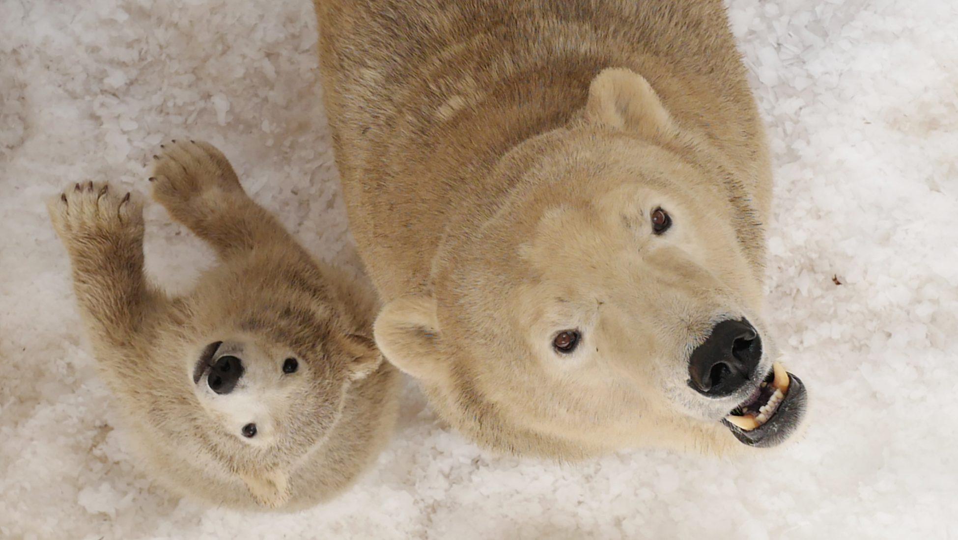 'I Turn Polar Bears White': Riddle Answer Explained