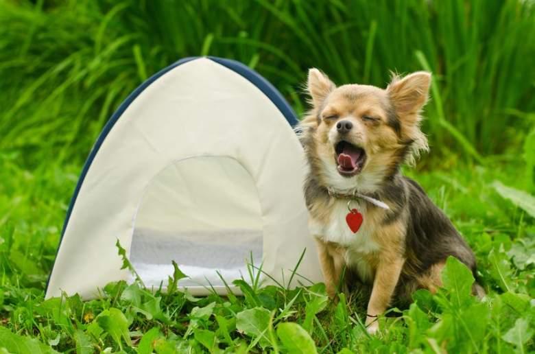 Dog camping tents
