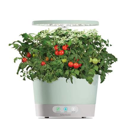 AeroGarden with tomatoes