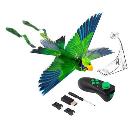 Zing Go Go Bird