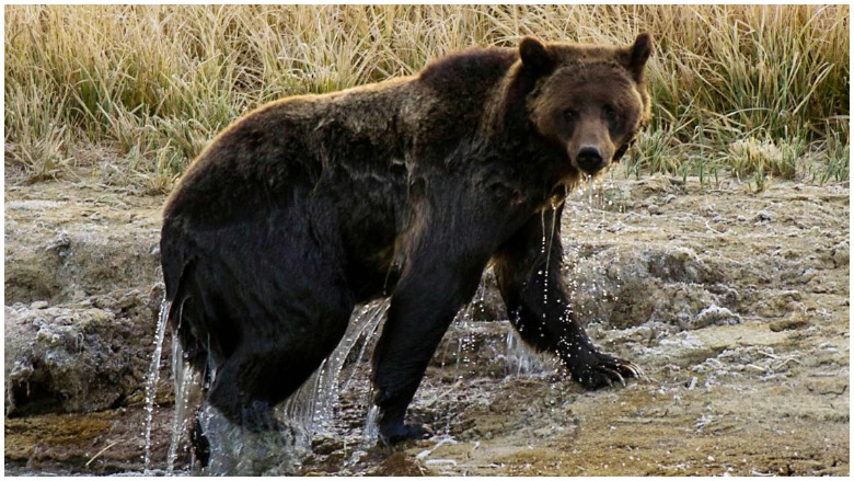 Austin Pfeiffer: Ohio Hunter Killed by Grizzly Bear in