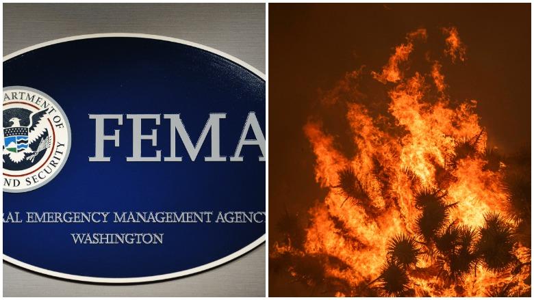 disaster unemployment assistance, unemployment wildfires, unemployment wildfire states, disaster unemployment, heavy talis shelbourne