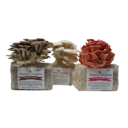 Specialty Trio Mushroom Grow Kit by Forest Origins