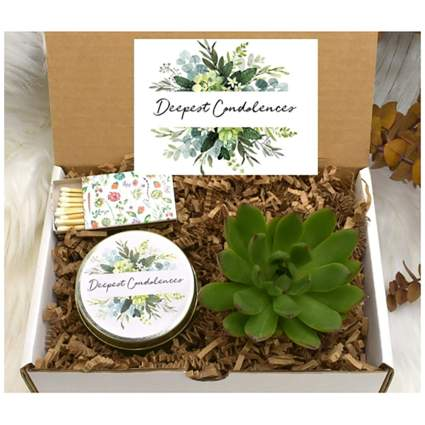 succulent and candle set