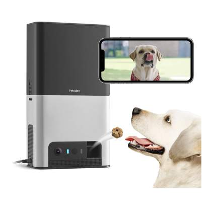 pet camera and treat tosser