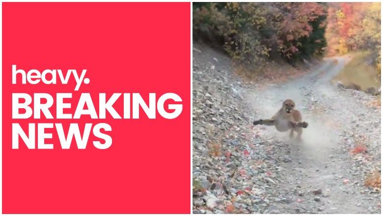 utah hiker cougar, utah man cougar chase, cougar utah canyon, utah hiker cougar chase, heavy talis shelbourne