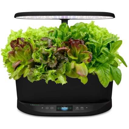 indoor hydroponic garden