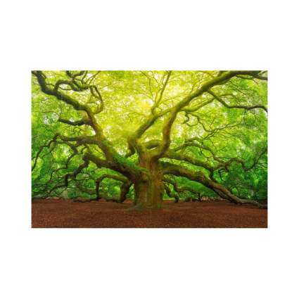 Angel Oak Tree Canopy Photo Poster (36 by 24 inches)