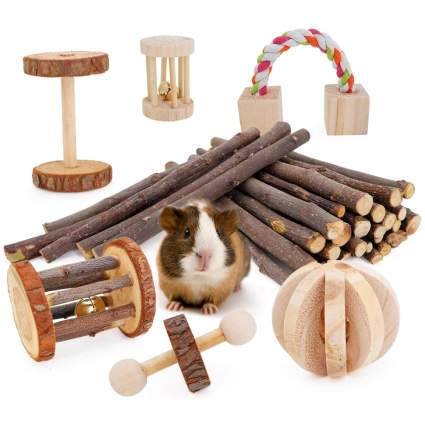 Guinea pig with wooden chew toys