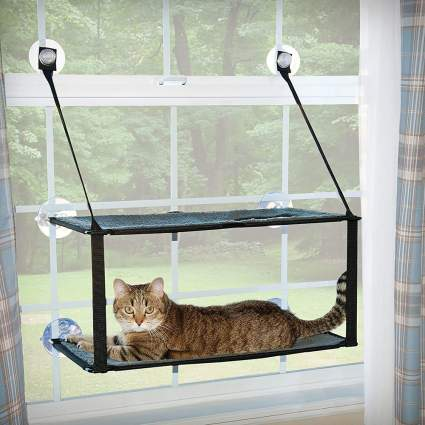 cat on suction cup window perch