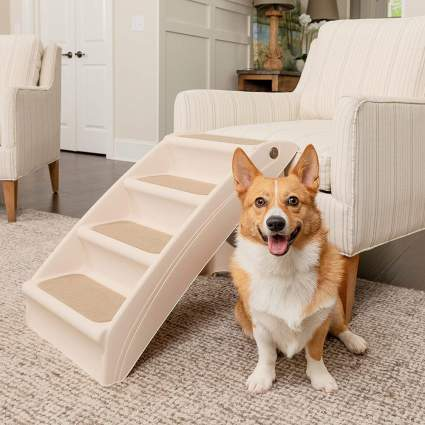 Corgi with chair and pet stairs