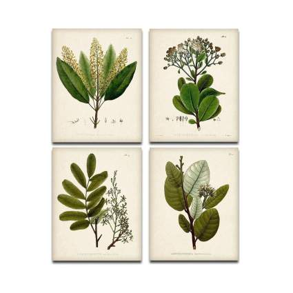 Set of Four Green Botanical Illustrations