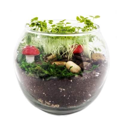 terragreen terrarium kit