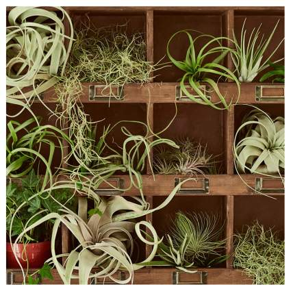 air plant monthly subscription box