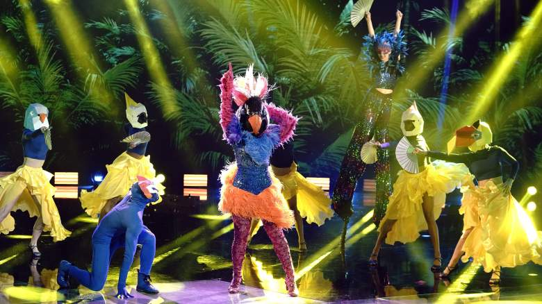 The Masked Dancer Exotic Bird