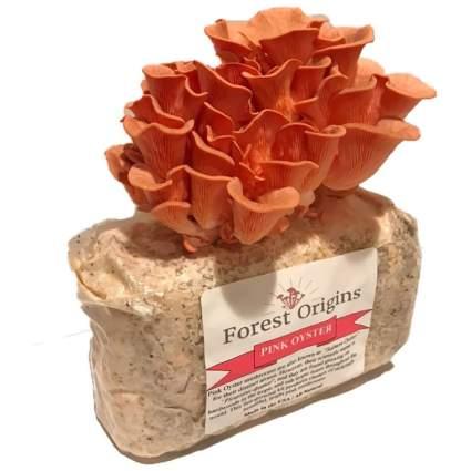 Forest Origins Pink Oyster Mushroom Grow Kit