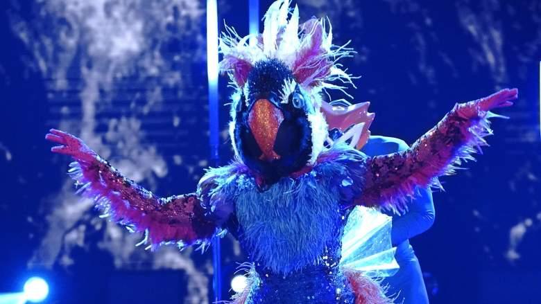 The Masked Dancer Exotic Bird
