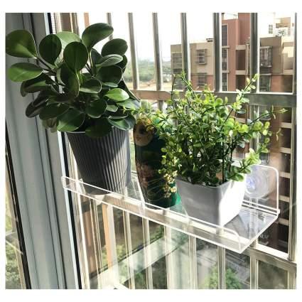 Clear plastic window shelf for plants