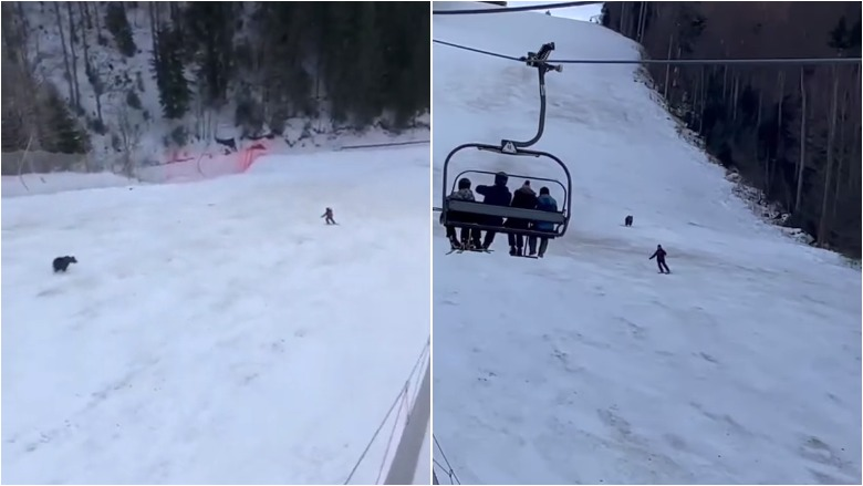 bear chases skier down mountain video