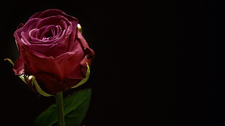 A red rose.