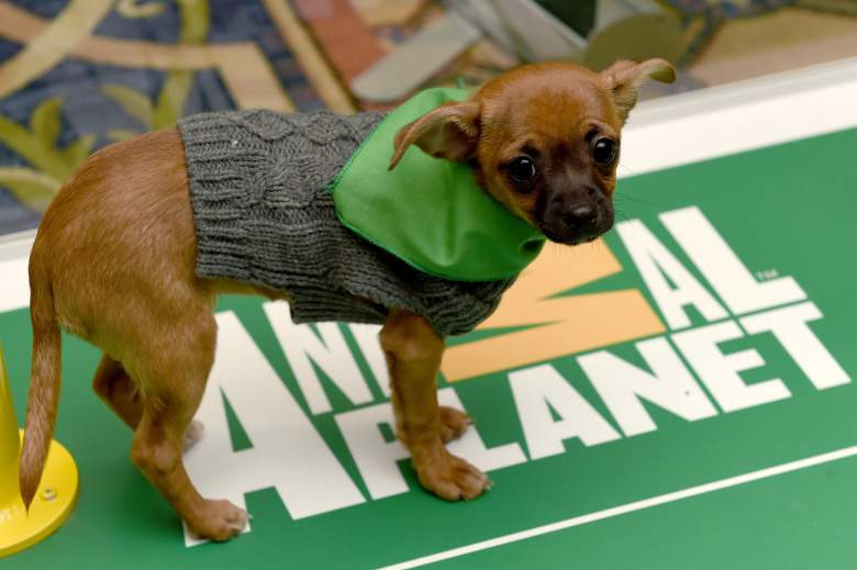 Puppy Bowl 2021 Time and Channel