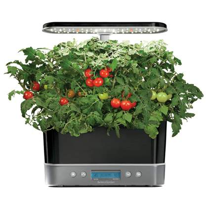 AeroGarden hydroponic garden