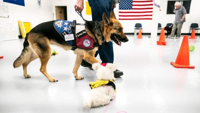 service dogs veterans ptsd
