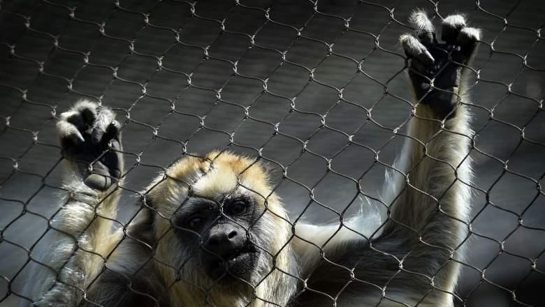 monkey joe rogan