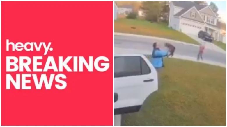 bobcat attack north carolina