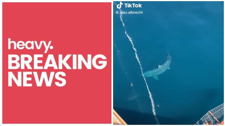 cruise ship passengers gigantic shark