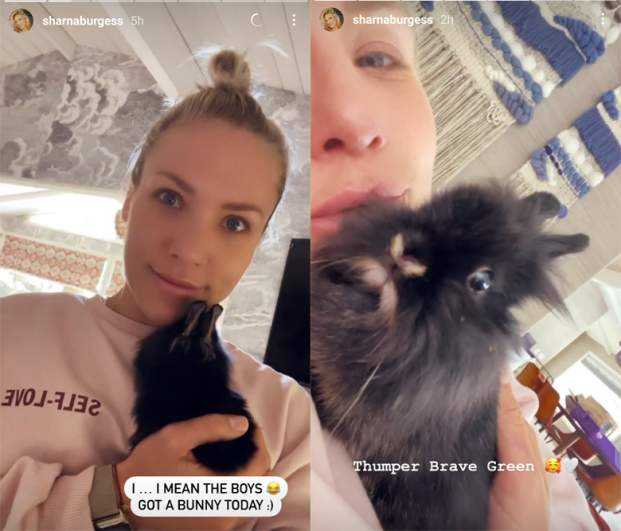 Sharna Burgess and Brian Austin Green adopted a baby bunny