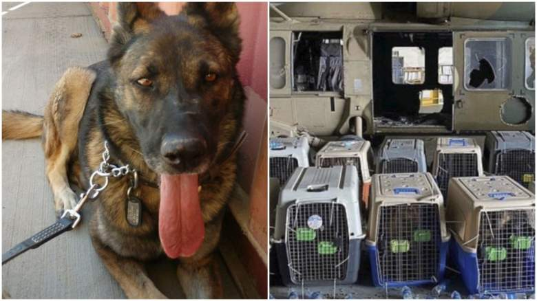 military dogs left behind in Afghanistan