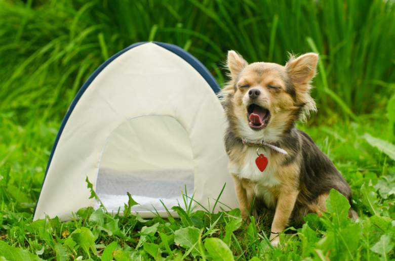 dog camping beds