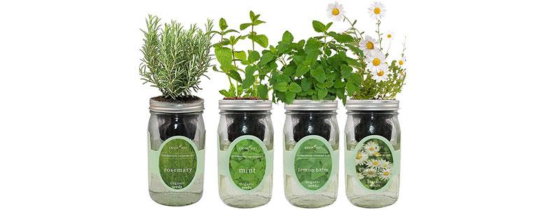 eco hydroponic mason jar organic