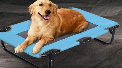 weeh elevated dog bed